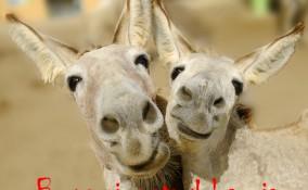 giornata mondiale del sorriso, immagini divertenti