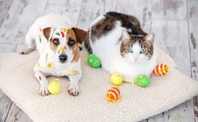pasqua, animali domestici, come trattarli