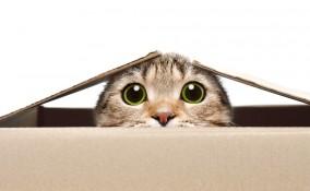 giochi per gatti fatti in casa