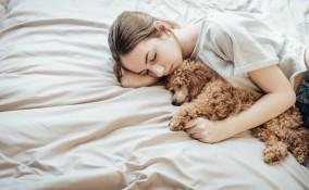 cane che trema, cause, veterinario