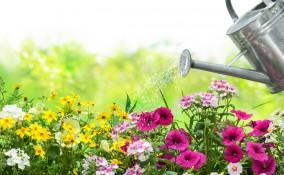 come togliere calcare acqua piante, come eliminare calcare acqua piante, togliere calcare acqua piante