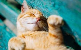 colpo di calore, gatto, sintomi