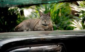 come allontanare gatti auto, gatti auto