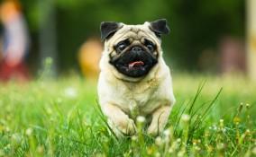 Cani piccoli e toy: 8 cose da sapere prima di accoglierli in casa