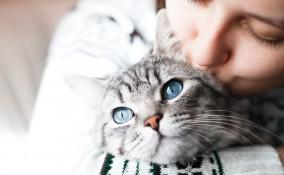 errori evitare gatto