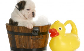 come lavare cucciolo
