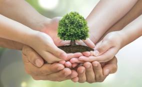 Festa degli alberi: la data e la storia