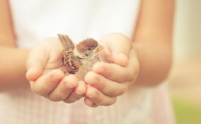giornata della gentilezza