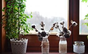 come conservare piante inverno, come proteggere piante inverno, come proteggere piante freddo
