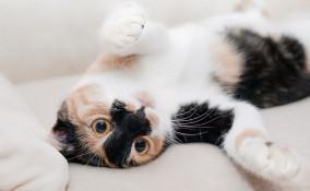 festa del gatto, 17 febbraio, origine Italia