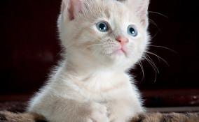 gattino, morde, mani