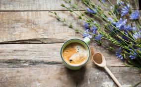 caffè di cicoria, effetti collaterali, utilizzo sicuro