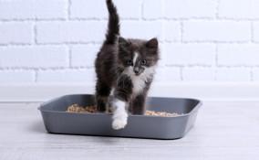 lettiera del gatto, dove si butta, raccolta differenziata bidoni