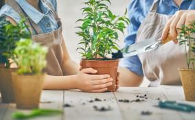 cura piante settembre