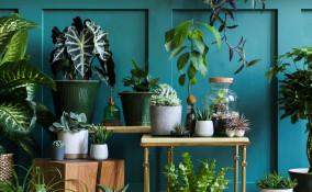 citazioni piante