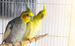 gabbia uccelli organizzazione