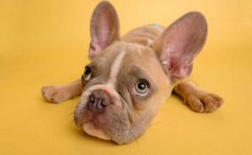 Musica rilassante per cani