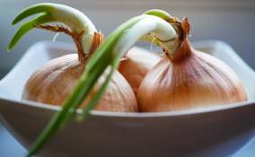 piantare cipolle scarti