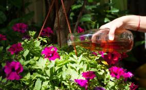 fertilizzanti casalinghi