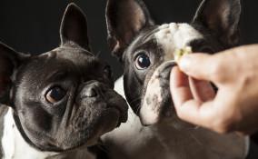 Alimenti per cani