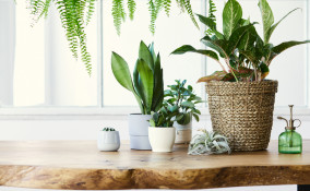 come togliere moscerini piante, come eliminare moscerini piante
