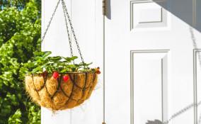 come coltivare fragole sospese, coltivazione fragole sospese