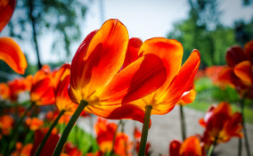 pensieri fiori