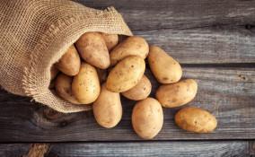 Quando si raccolgono le patate