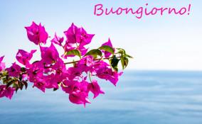 buongiorno con i fiori estivi, buongiorno immagini