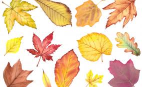 foglie autunnali da stampare, foglie autunno da stampare