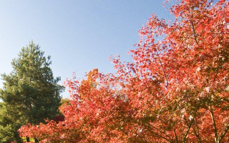 Foliage, 8 posti dove vedere lo spettacolo degli alberi a colori
