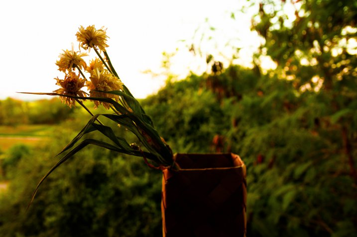 Come essiccare i fiori, le tecniche e i consigli utili