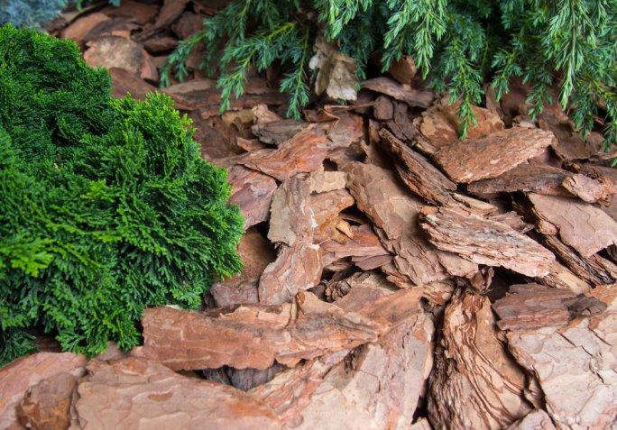 Giardinaggio d'inverno: come difendere la salute delle piante dal freddo