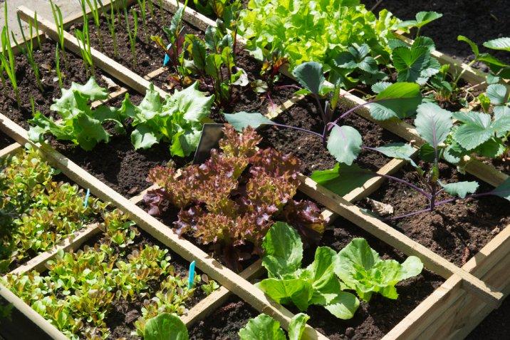 cosa coltivare ad aprile, coltivare aprile, orto di primavera