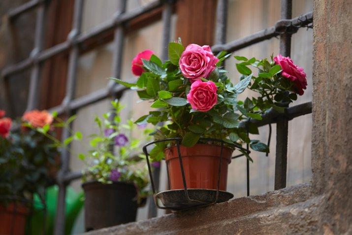 5 fiori primaverili da piantare a maggio sul balcone