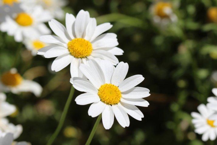 Fiori da balcone estivi: i magnifici 5 da piantare con la bella stagione
