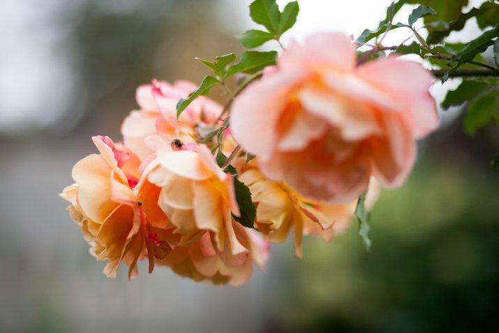 Fiori da seminare in autunno, quali sono e i consigli utili per coltivarli