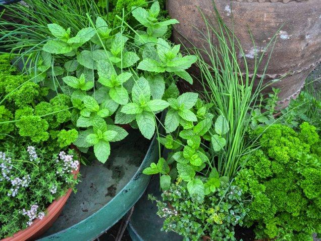 Coltivare le erbe aromatiche, i 9 trucchi per cominciare
