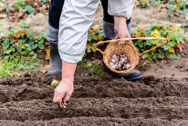 cosa coltivare novembre orto, orto novembre