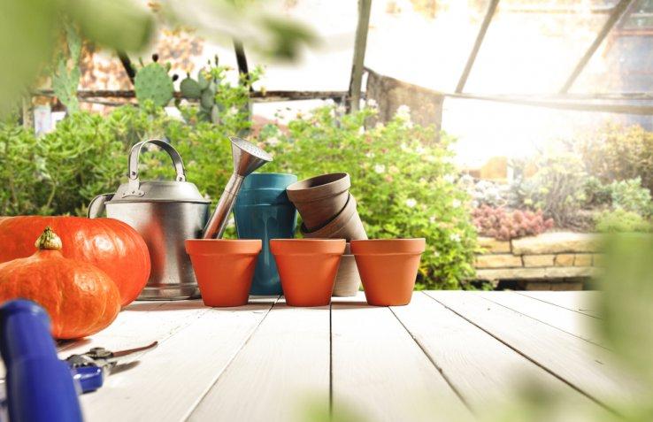 Cosa coltivare a novembre nell'orto di casa