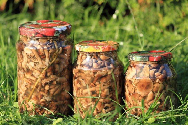 Funghi chiodini: come cucinarli e 3 ricette da provare