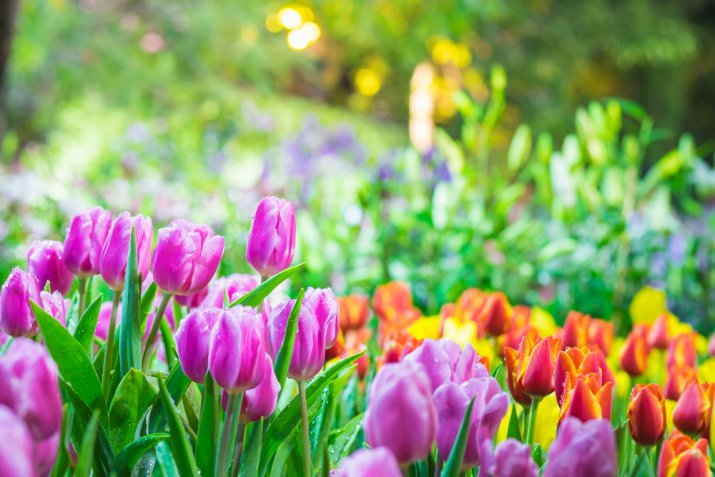 Giardino di primavera per i principianti, 5 consigli per i nuovi acquisti