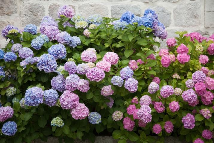 Fiori estivi da giardino: avevi pensato a questi 7?