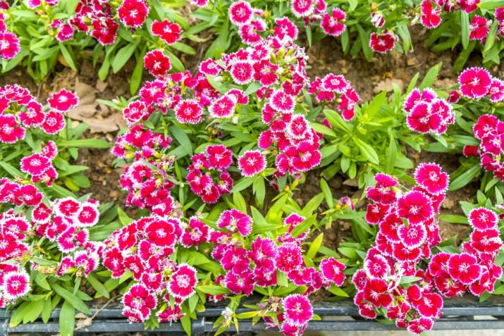 Quali fiori coltivare a settembre, i magnifici 5