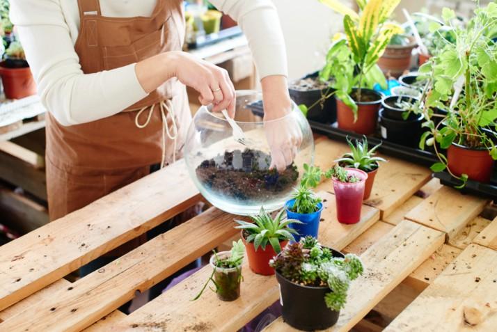 Terrario piante fai da te: come fare un grazioso giardino in miniatura