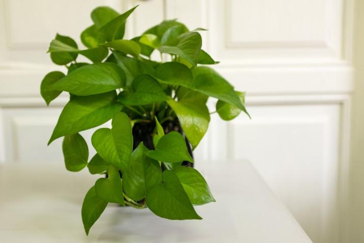 Piante adatte per l'ufficio: 5 amiche verdi