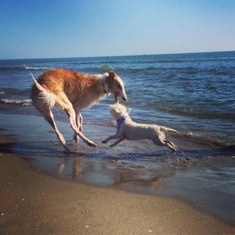 Baubeach®: con Patrizia Daffinà i nostri amici cani vanno alla spiaggia