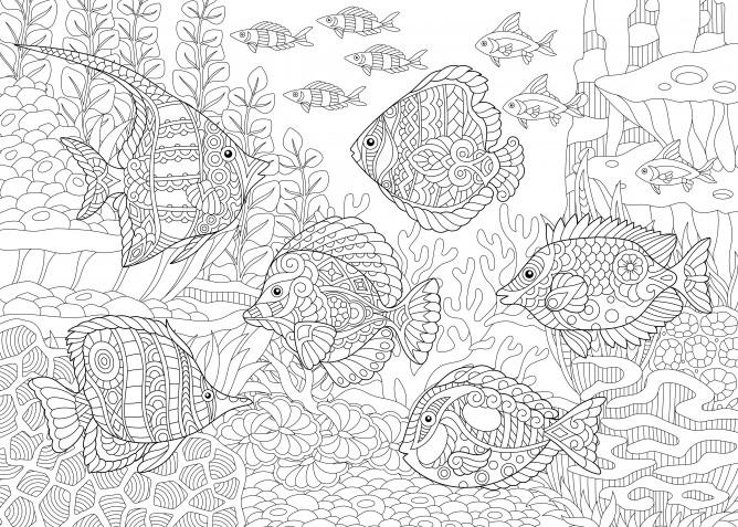 Disegni mare da colorare: le immagini antistress