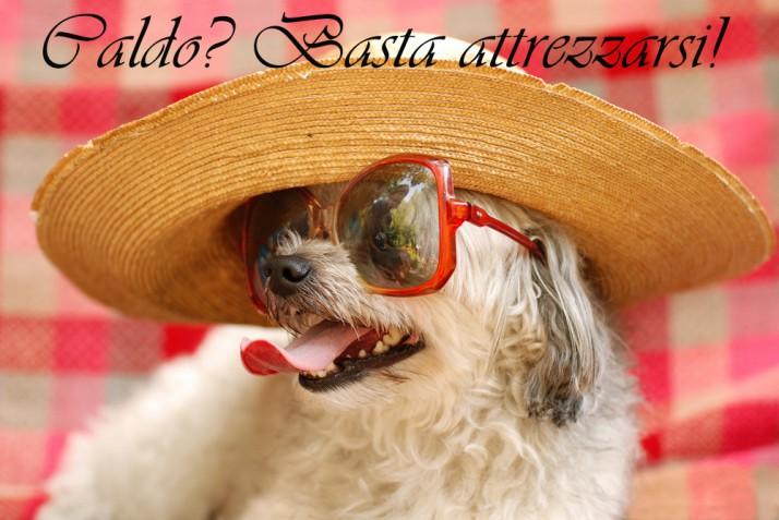 Immagini divertenti sul caldo estivo: le più simpatiche per sdrammatizzare