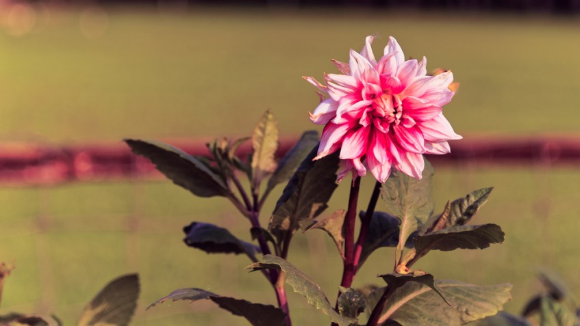 Piante da interno con fiori: nomi e foto delle più belle